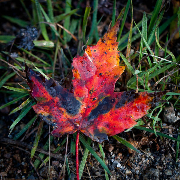 Photograph - The Colors Of Autumn by David Patterson