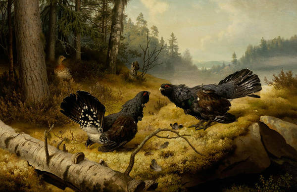 Painting - The Fighting Capercaillies by Ferdinand von Wright