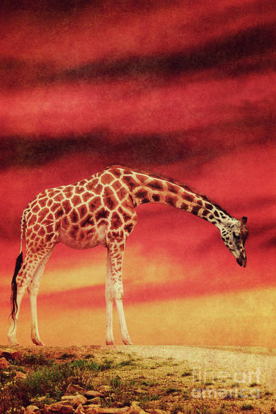 Digital Art - The Giraffe by Angela Doelling AD DESIGN Photo and PhotoArt
