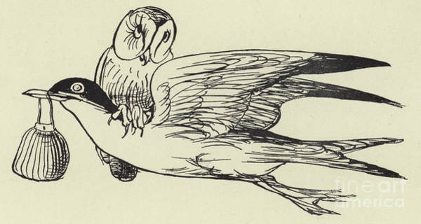 Wall Art - Drawing -  The Goodnatured Grey Gull by English School