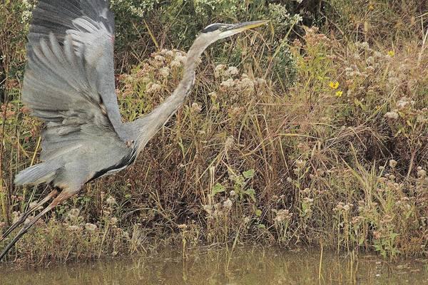 Wall Art - Photograph - The Heron And The Fall by Valia Bradshaw