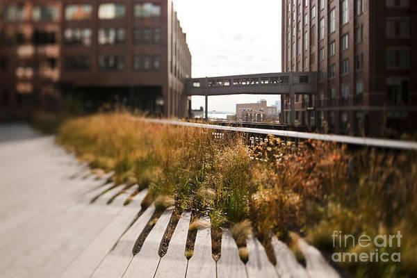 Wall Art - Photograph - The High Line Park by Eddy Joaquim