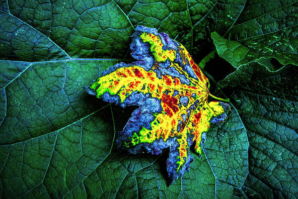 Photograph - The Leaf by Hans Franchesco