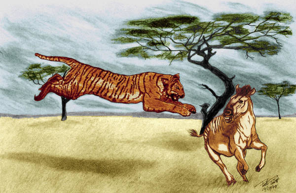 African Tiger Wall Art - Drawing - The Lunge by Peter Piatt
