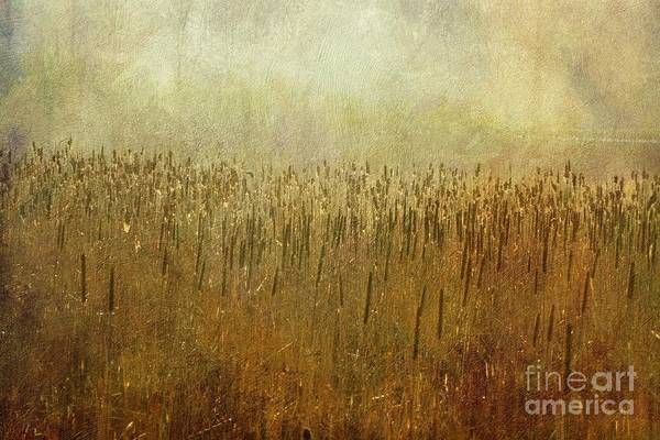 Wall Art - Photograph - The Marsh by Mary Machare