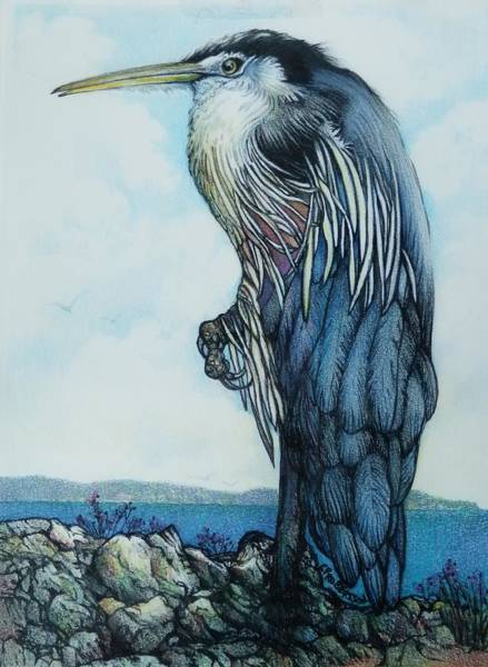 Great Blue Heron Drawing - The Old Heron by Catherine Robertson