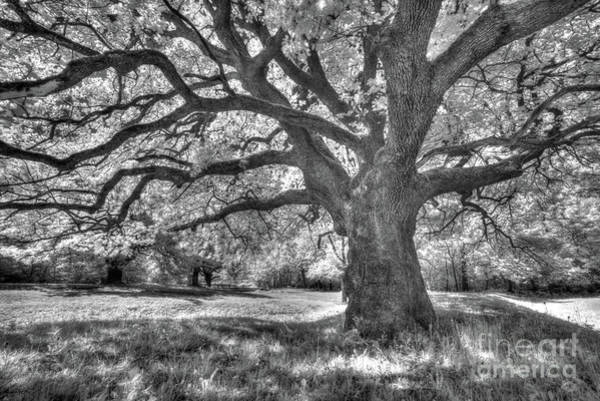 Spring Awakening Photograph - Shady Grove by DiFigiano Photography