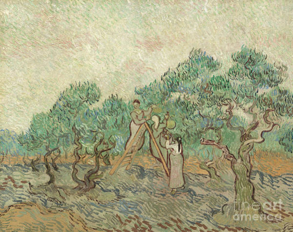 Pickers Wall Art - Painting - The Olive Orchard, 1889 by Vincent Van Gogh