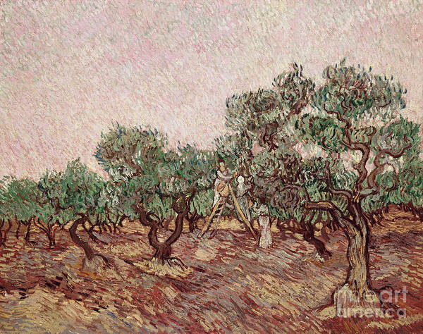 Pickers Wall Art - Painting - The Olive Pickers by Vincent van Gogh