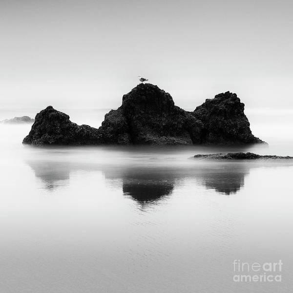 Wall Art - Photograph - One Gull by Masako Metz