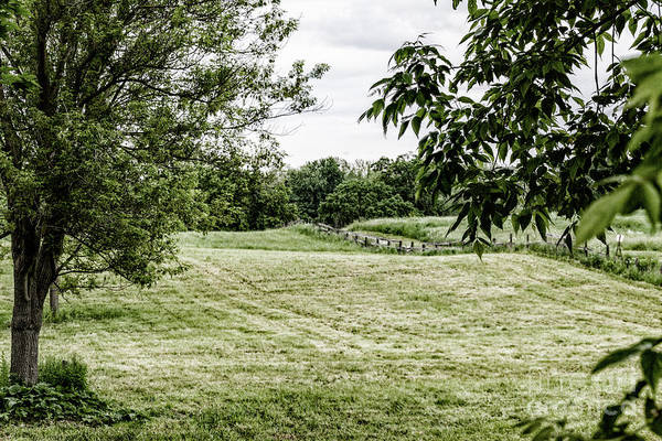 Photograph - The Pasture by William Norton