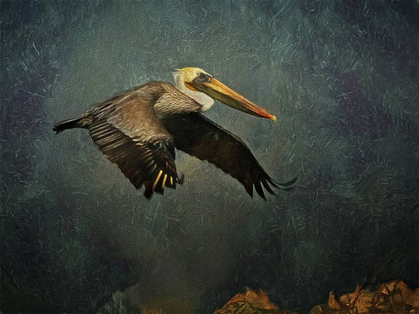 Shore Bird Digital Art - The Pelican  by Ernie Echols