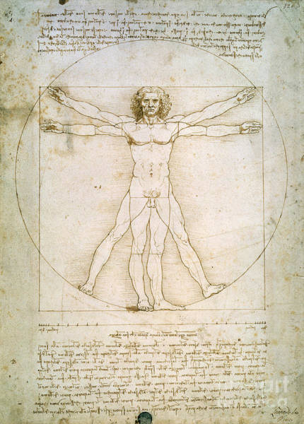 Male Figure Drawing - The Proportions Of The Human Figure by Leonardo da Vinci