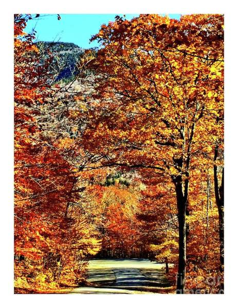 Photograph - The Richness Of Autumn Treasures by S Forte Designs