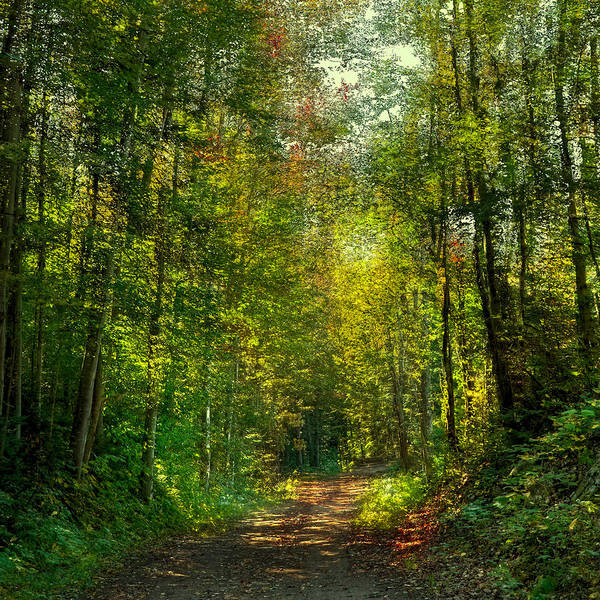 Photograph - The Road To Cary Lake by David Patterson