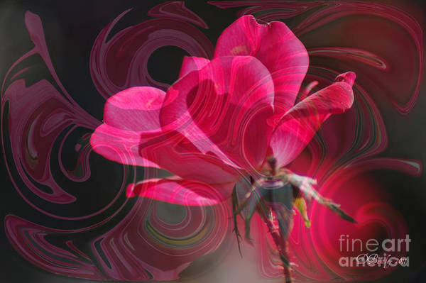 Photograph - The Rose by Donna Bentley
