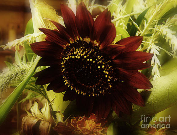 Photograph - The Softness Of Autumn by RC DeWinter