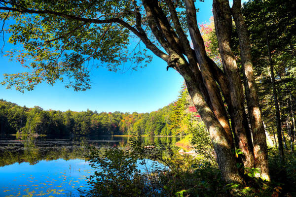 Photograph - The South End Of Cary Lake by David Patterson