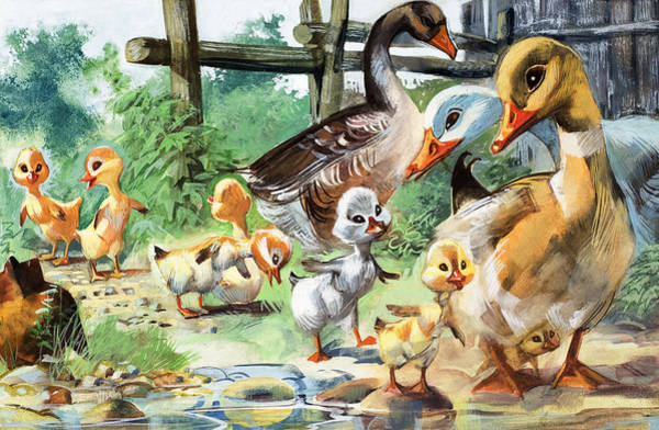 Water Fowl Painting - The Ugly Duckling by English School