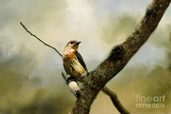 Bird Watcher Photograph - The Watcher by Darren Fisher