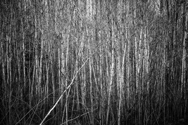 Photograph - Thicket by Doug Gibbons