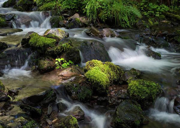 Photograph - Thompson Creek by Robert Potts