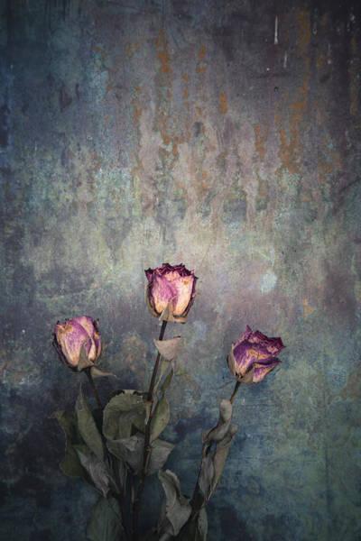 Photograph - Three Dried Roses by Maria Heyens