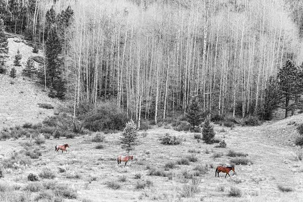 Photograph - Three Horses by James BO Insogna