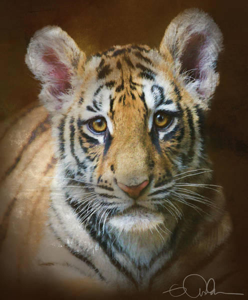Photograph - Tiger Cub by Gloria Anderson