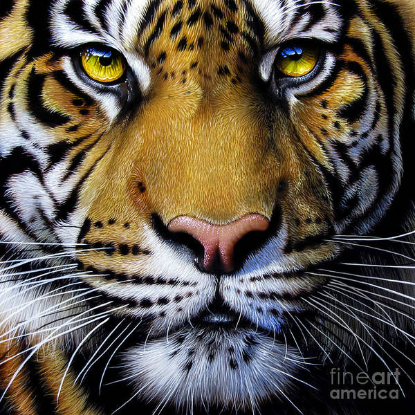 Big Cat Wall Art - Painting - Tiger  by Jurek Zamoyski