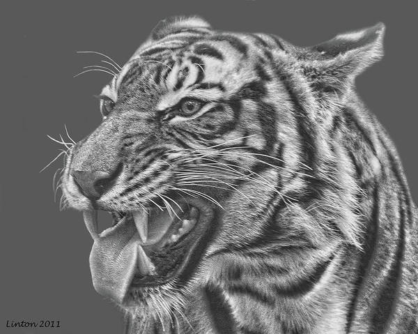 Digital Art - Tiger Teeth by Larry Linton