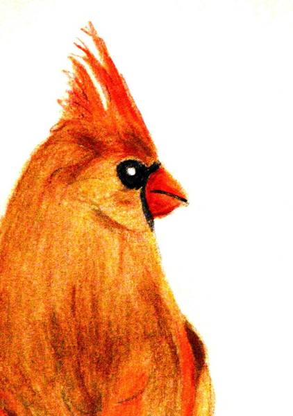 Red Cardinal Drawing - Birds Of A Feather by Angela Davies