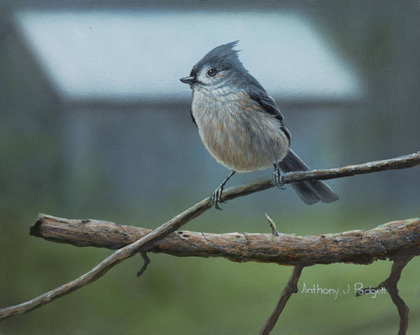 Titmouse Painting - Titmouse by Anthony J Padgett