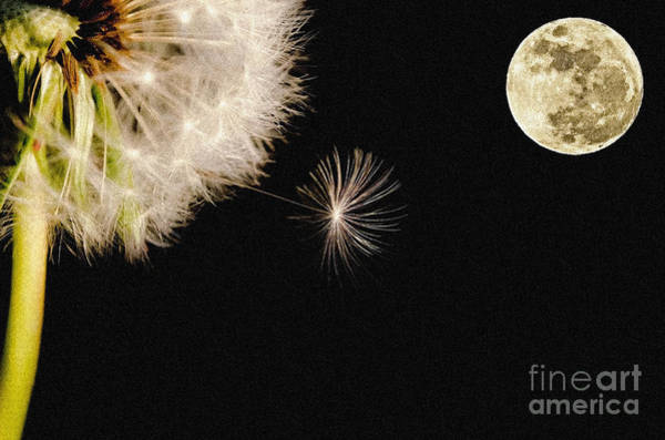 Photograph - To Moon And Back by Celestial Images
