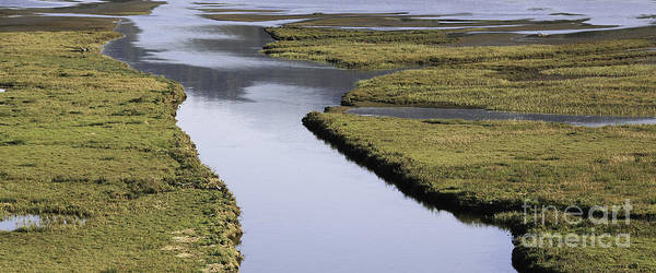 Photograph - Tomales Marsh by Joyce Creswell