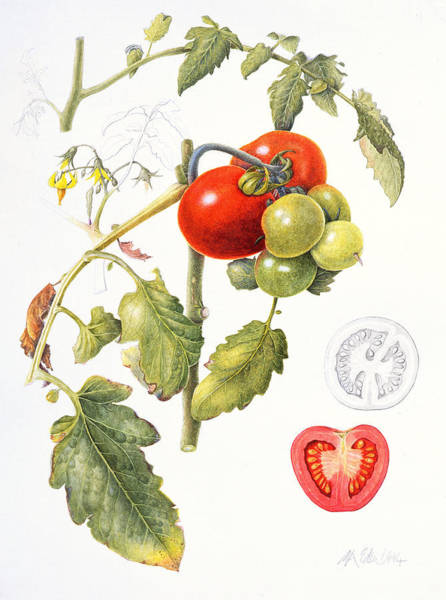 Food Art Painting - Tomatoes by Margaret Ann Eden