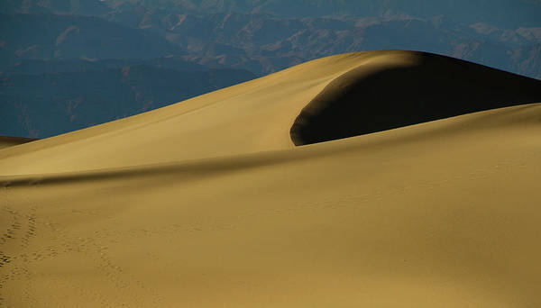 Death Valley Np Photograph - Tones Of Mesquite by Kunal Mehra