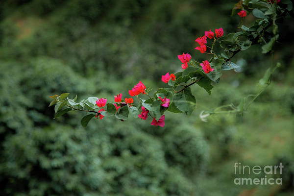 Wall Art - Photograph - Touch Of Red by Iris Greenwell