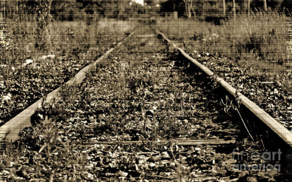Photograph - Tracks  To Where by Traci Cottingham