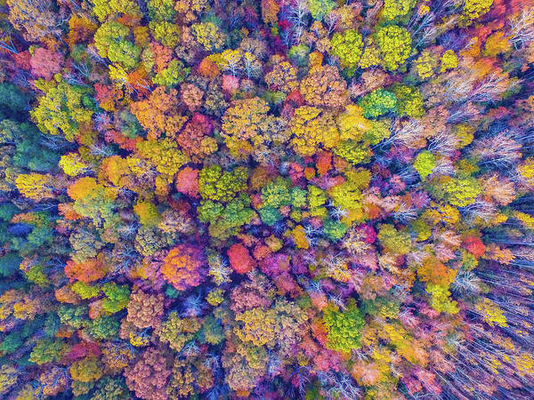Photograph - Travelers Rest Treetops #2 by James Richardson