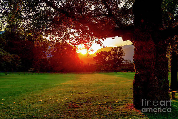 Photograph - Tree And Sunset by Mats Silvan