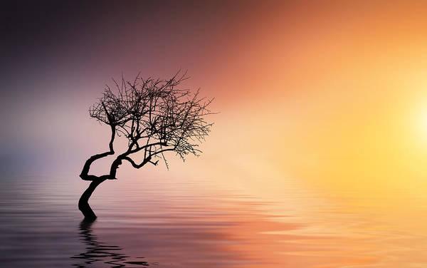 Apple Blossom Photograph - Tree At Lake by Bess Hamiti