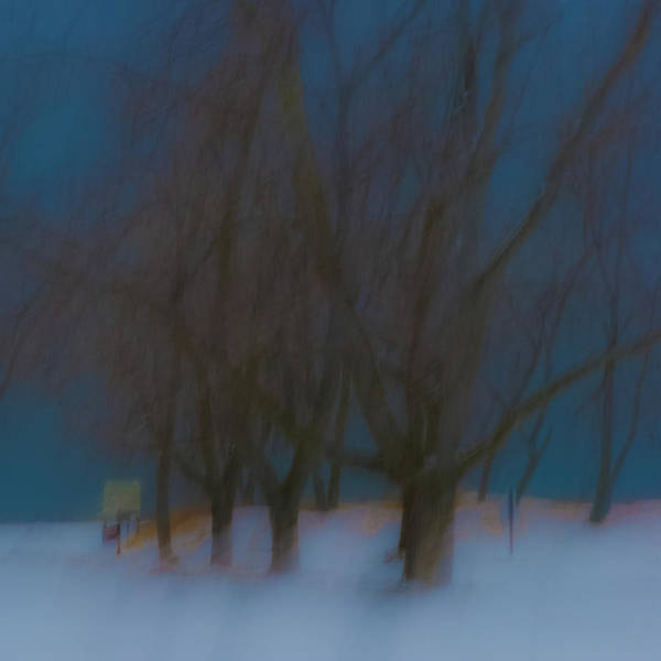 Photograph - Tree Dreams by Stewart Helberg