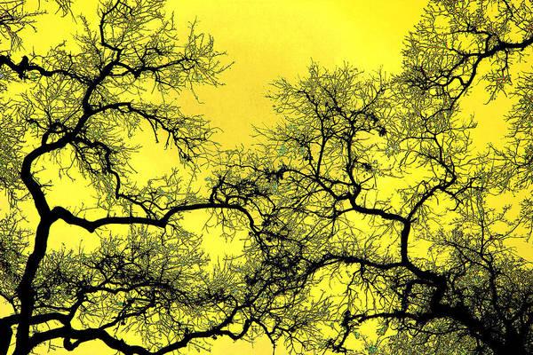 Photograph - Tree Fantasy 18 by Lee Santa