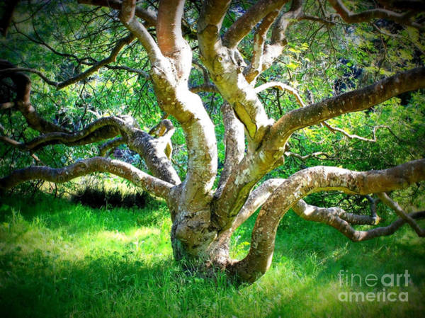 Photograph - Tree In Golden Gate Park by Carol Groenen