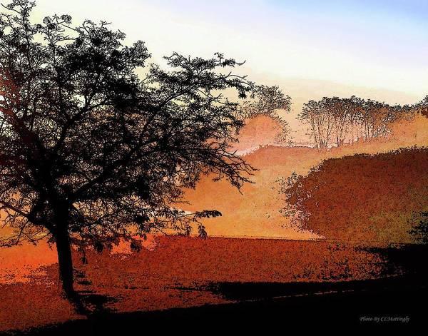 Tree In Morning Light Art Print