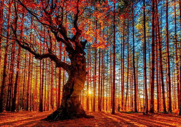 Color Digital Art - Tree by Maye Loeser