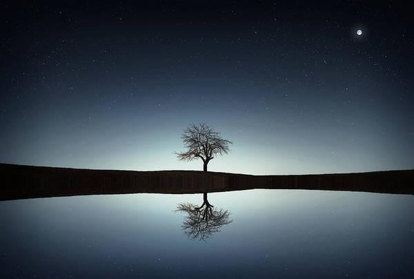 Tree Near Lake At Night Art Print
