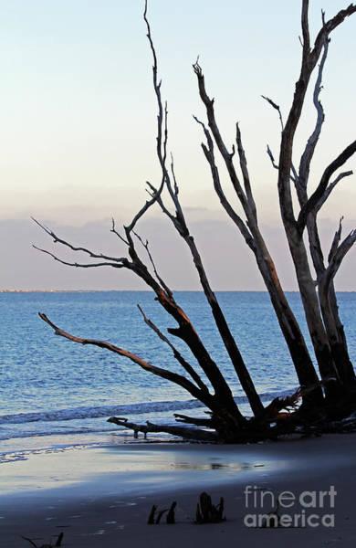 Photograph - Tree On Boneyard Beach by Jennifer Robin