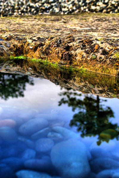 Photograph - Tree Pond Water Reflections by John Williams